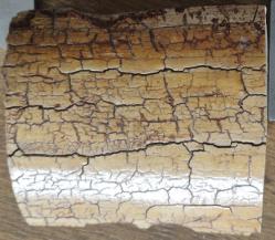 Bloc ivoire de mammouth 270 g ,lar/épaiss 23 mm mm env, haut 80 mm env