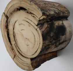 Bloc ivoire de mammouth 1.200 kg ,diam 120 mm env, haut 100 env