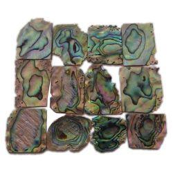 plaques de nacre bleue (Paua)