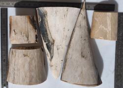 Blocs ivoire de mammouth blanc pour PDT ou bouton, 500 g
