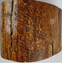 Ivoire de mammouth, 1.600kg, diam120 mm env, hauteur 100 mm