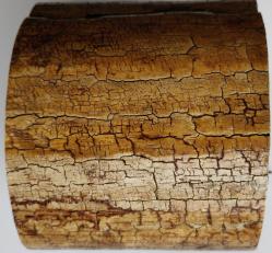 Ivoire mammouth, 3 kg, diam 130 mm env, hauteur 130 mm env
